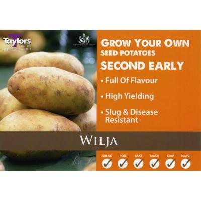 Wilja 2 kg Seed Potatoes