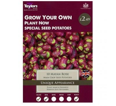Taster Packs Potato Mayan Rose