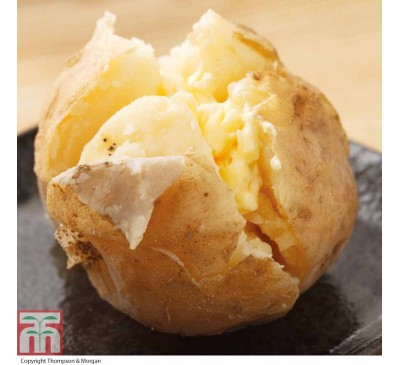 Cara 2 kg Seed Potatoes