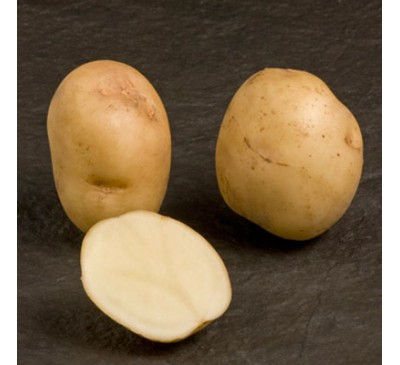 Foremost 2 kg Seed Potatoes