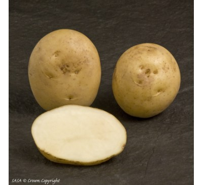 International Kidney 2 kg Seed Potatoes