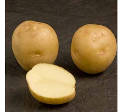 Marfona 2 kg Seed Potatoes