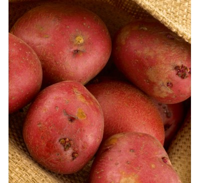 Red Duke Of York 2 kg Seed Potatoes