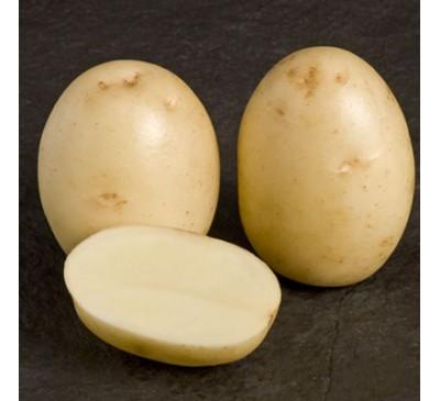 Winston 2 kg Seed Potatoes
