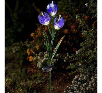 Solar Flower Crocus