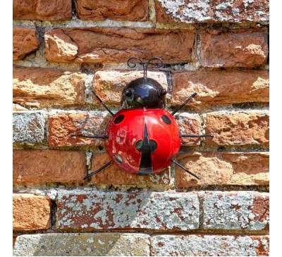 Hanging on Large Ladybird