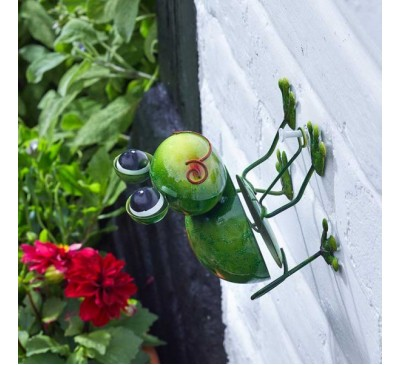 Hanging on Funkee Frog
