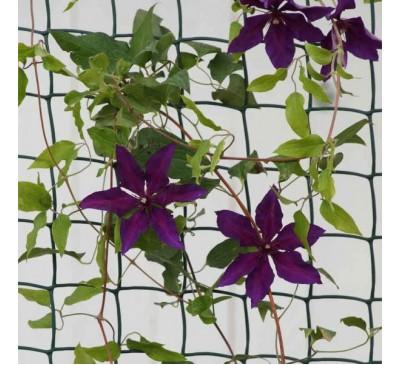 Climbing Plant & Fencing Mesh - Green 50mm Mesh 0.5 x 5m