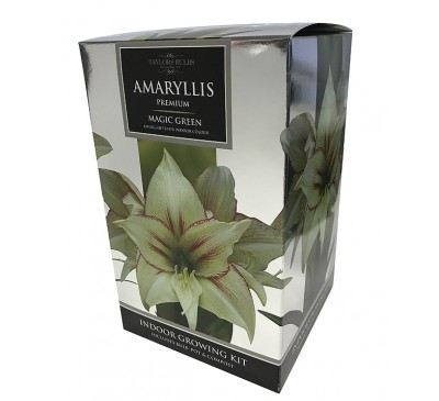 Amaryllis Magic Green