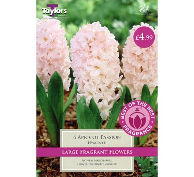 Hyacinth Apricot Passion Best of the Best