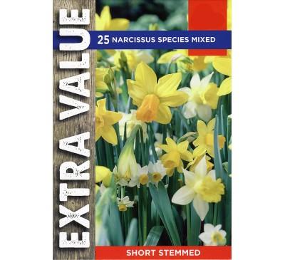 Extra Value Narcissi Species Mixed