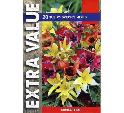 Extra Value Tulips Species Mixed