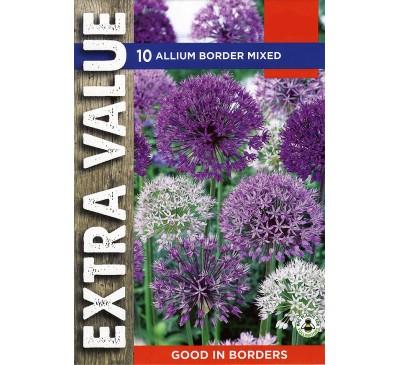 Extra Value Allium Border Mixed