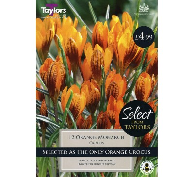 Crocus Orange Monarch Selection