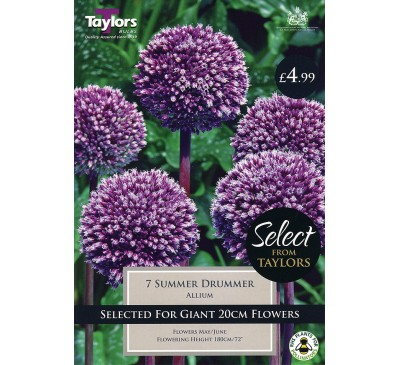 Allium Summer Drummer Selection