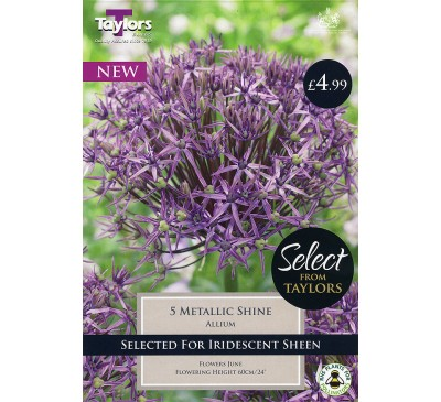 Allium Metallic Shine Selection