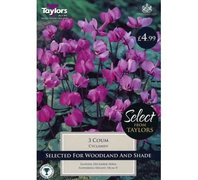 Cyclamen Coum Selection