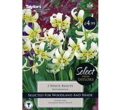 Erythronium White Beauty Selection
