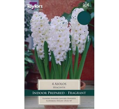 Hyacinth Ailos