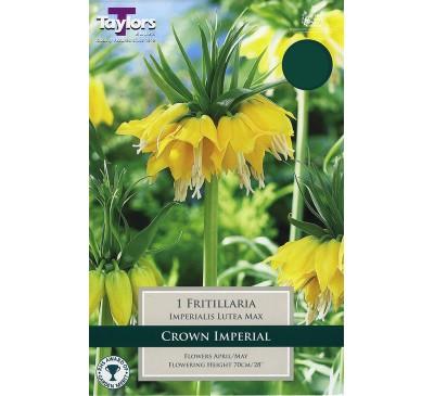 Fritillaria Imperialis Lutea Max