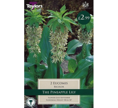 Bee Friendly Eucomis Bicolor