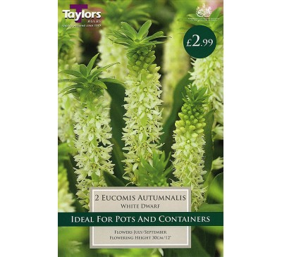 Bee Friendly Eucomis Autumnalis White