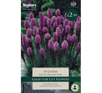 Bee Friendly Liatris Spicata