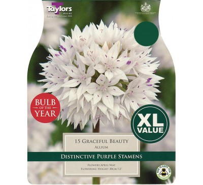 Allium Graceful Beauty XL Value
