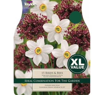 Narcissi Birds & Bees XL Value