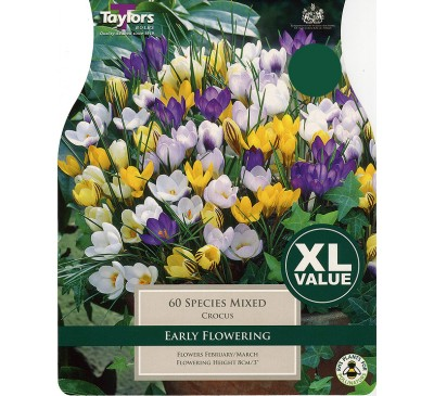 Crocus Mixed Species XL Value
