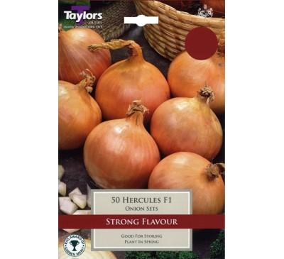 Pre-Packed Onions Hercules F1 14-21