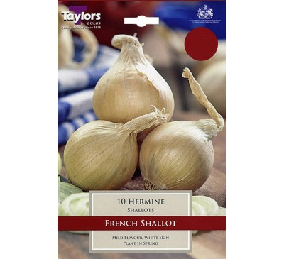 Pre-Packed Shallots French Hermine 15-35