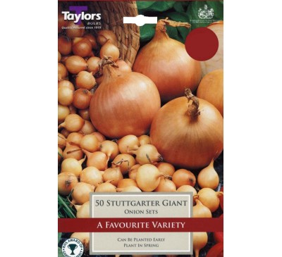 Pre-Packed Onions Stuttgarter Giant 14-21