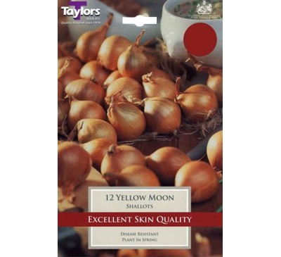 Pre-Packed Shallots Yellow Moon 7-13