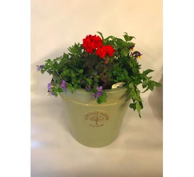 Planted Pot 33 cm